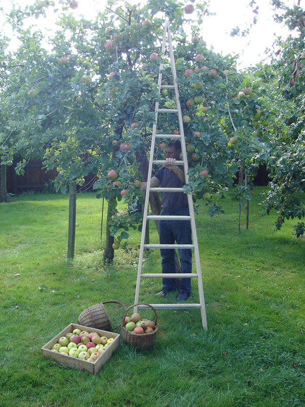 Orchard Ladder Timber Step Ladders Hulley Heritage Range